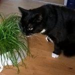 Leben mit Katze: Bei Doktor, Luzi! dreht sich alles um Ernährung und Gesundheit