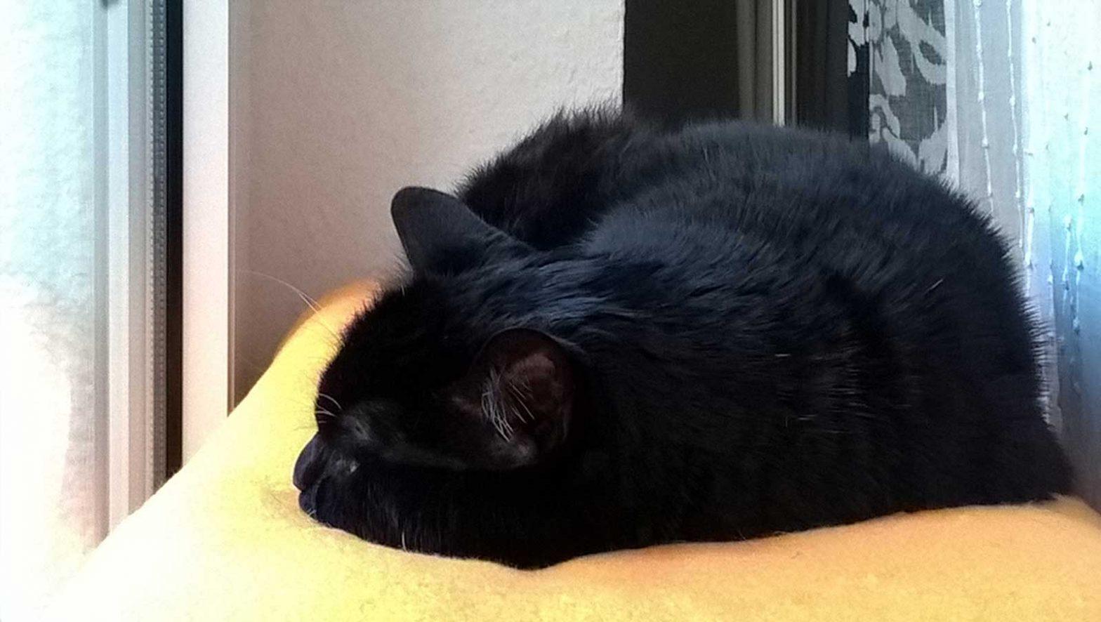 Luzi liebt ihren Katzen Fensterplatz: die Luzi Balkonbank