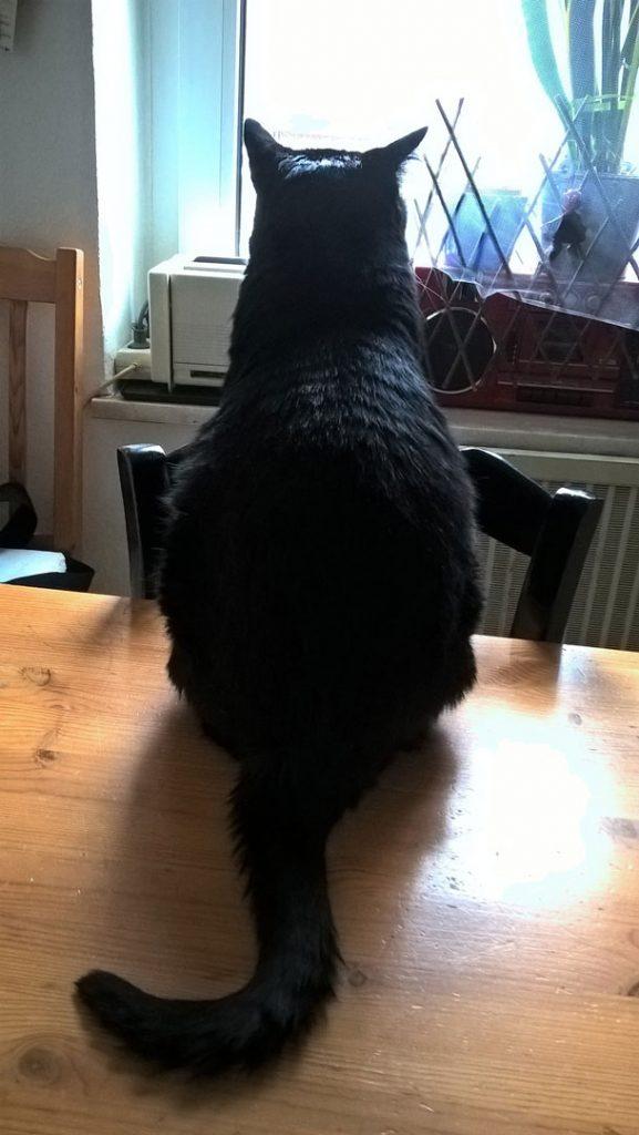 Luz in ihrem Luzi Revier auf dem Küchentisch