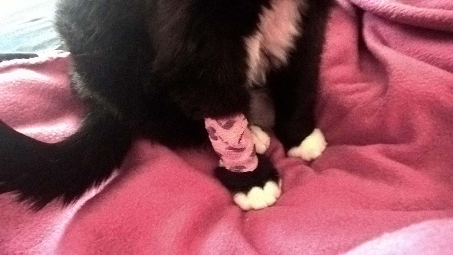 Luzi nach ihrer Katzen Zahn OP: mit Herzchenpflaster
