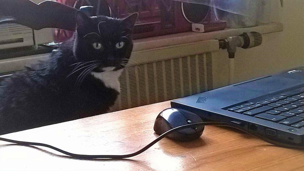 Katze Luzi sitzt am Rechner