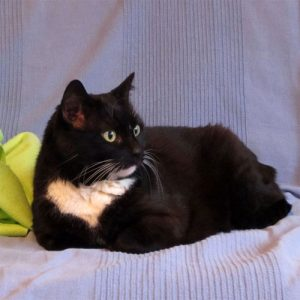 Leben mit Katze: Luzi Bär, Model-mäßig auf dem Sofa