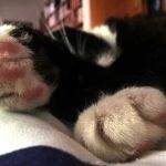 Luzi Blog: Leben mit Katze in Luzis Revier