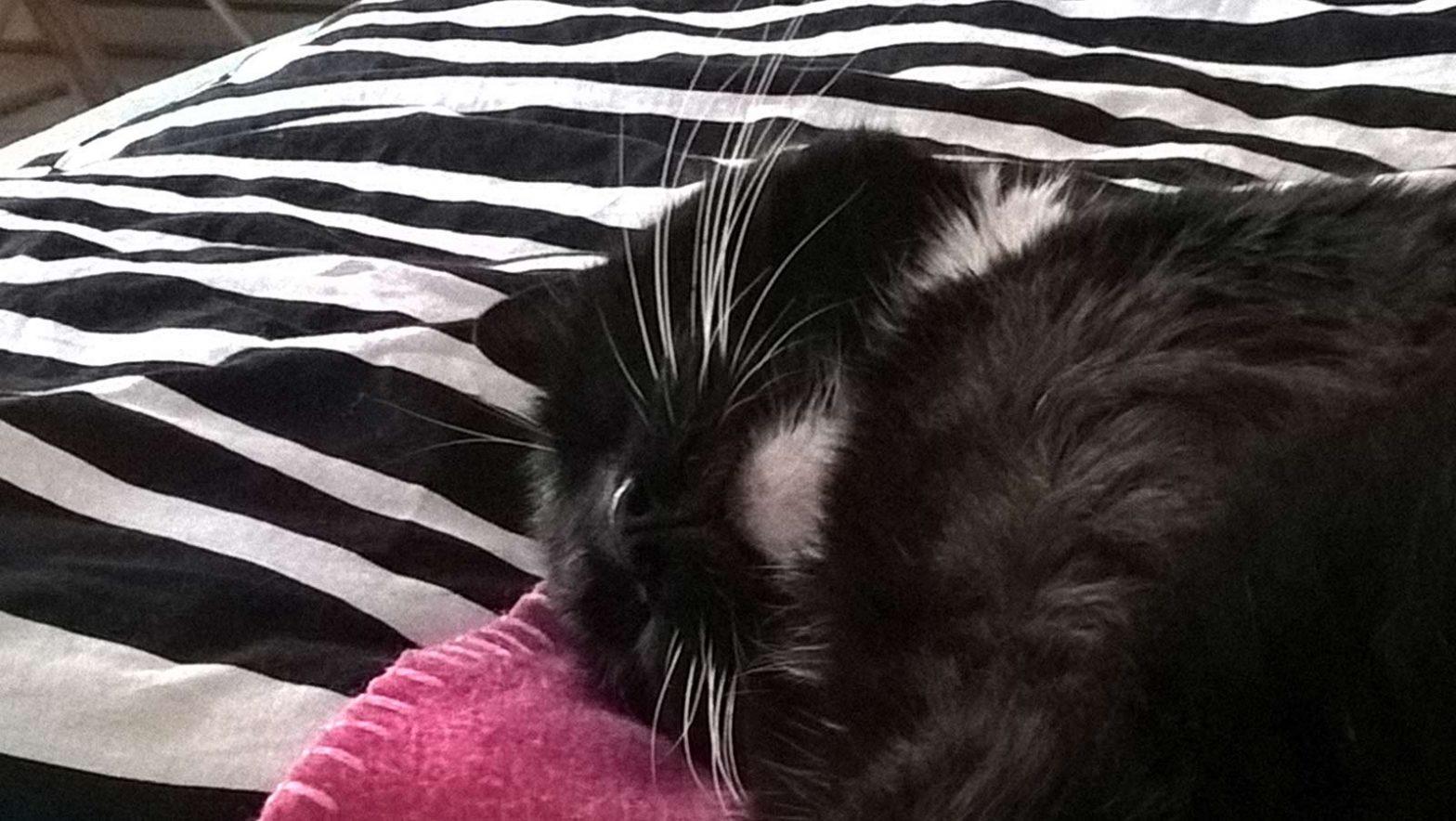 Luzi, Katze aus dem Tierheim, beim Nachmittagsschlaf