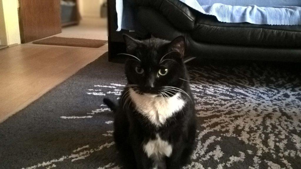 Mit Katze clickern: Luzi wartet auf den nächsten Click