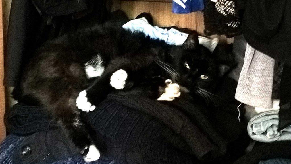 Leben mit Katze: Luzi Katze im Schrank