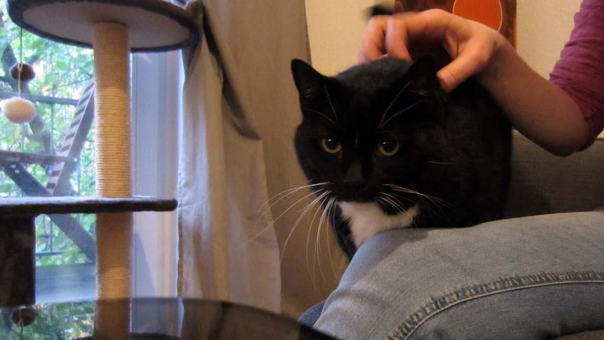 Erster Vertrauensbeweis beim Kennenlernen einer Katze