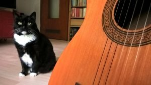 Luzi Songs: Luzi mit Gitarre