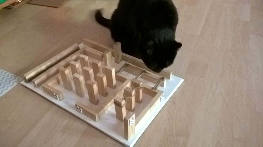 Stabiles Fummelbrett Test durch Katze Luzi