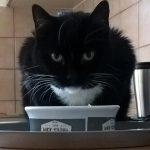 Was ist die passende Futtermenge für Katzen? Luzi findet: Auf jeden Fall viel!
