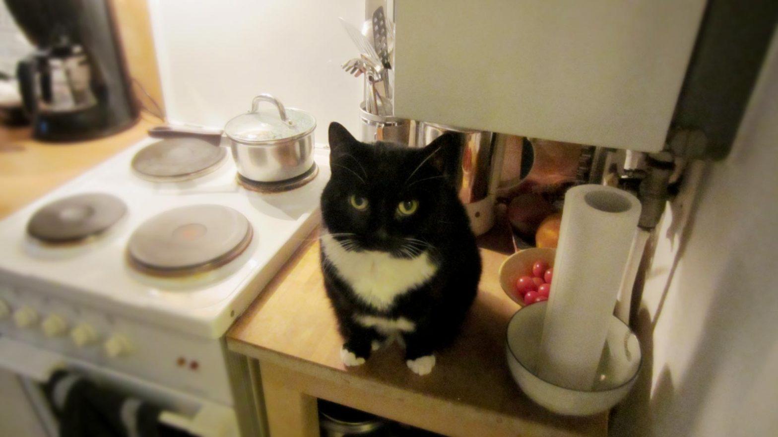 Katze in der Küche: Unter der Gastherme ist einer von Luzis Lieblingsplätzen