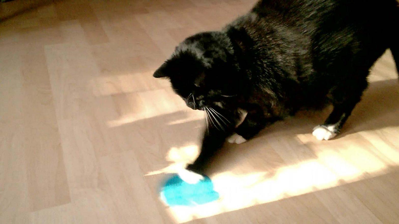 Psychosomatik Katze Luzi findet nach OP wieder Freude an der Jagd