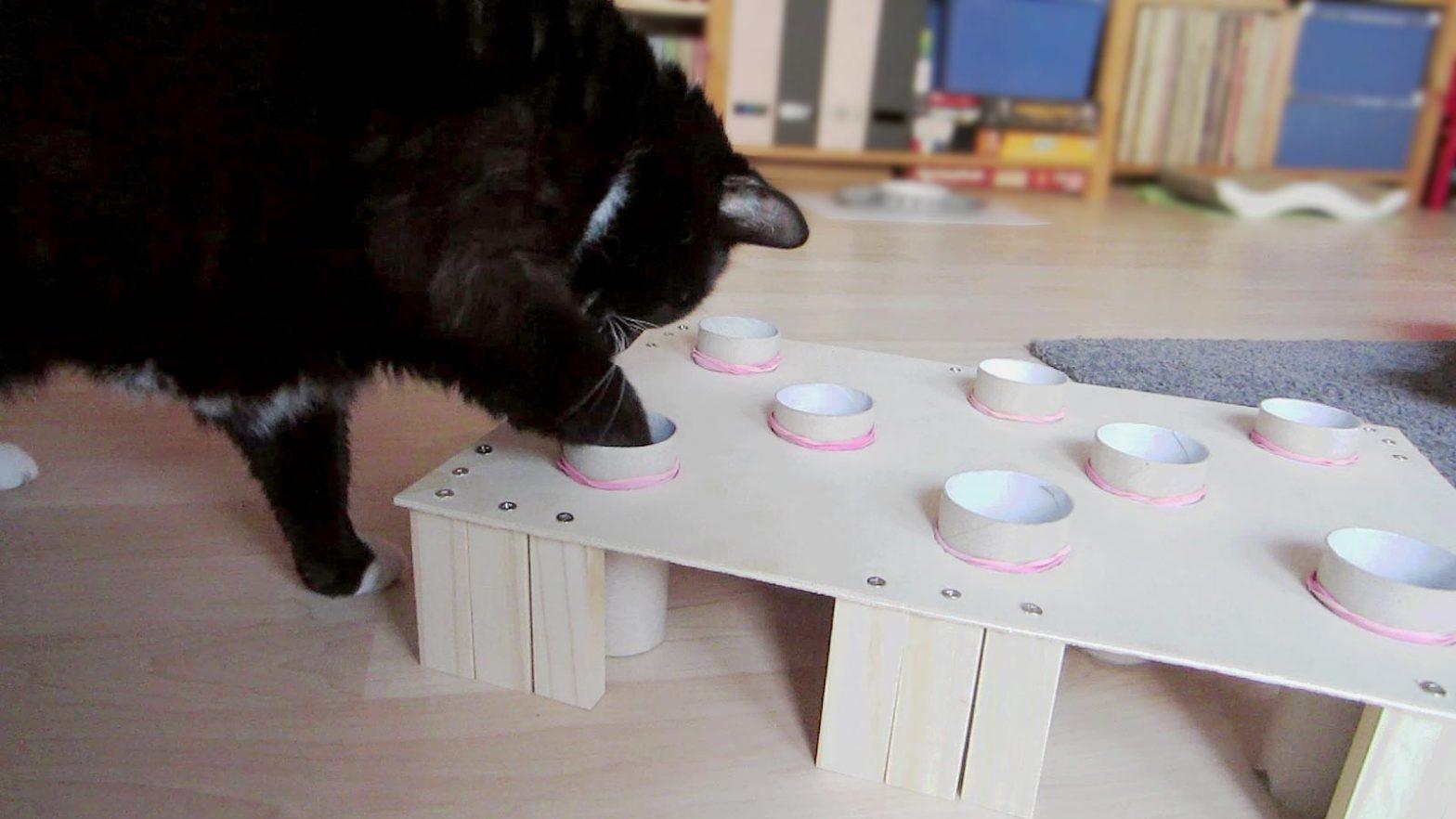 Luzi und ihre Fummelbox für Katzen
