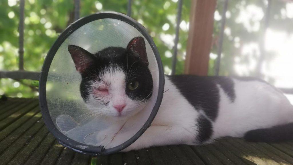 Ob Frau Störtebecker jemals ein beliebter Katzenname wird? foto: Romy