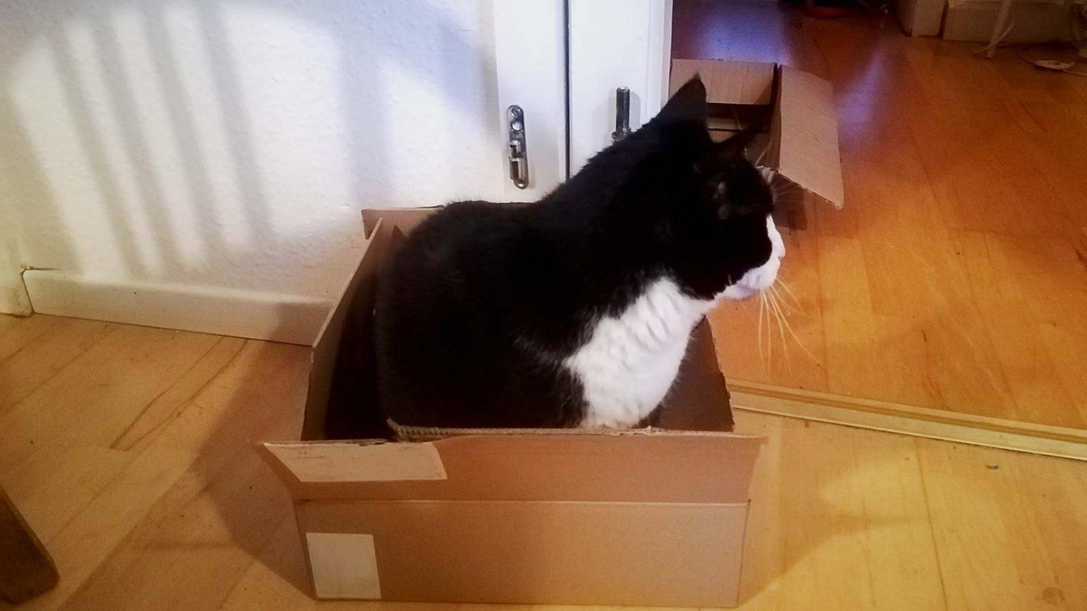 Katzen lieben Kartons. In diesem Fall Kater Cobi. foto: Romy