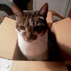 Wo ein Karton, da ein Joschi: Joschi in the Box. foto: Romy