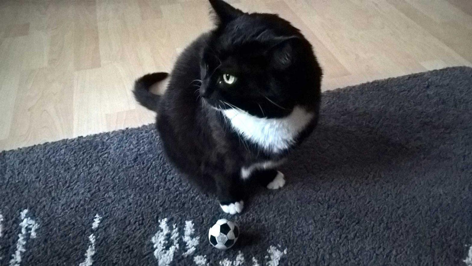 Luzi: Katze spielt nicht mit Ball, wenn kein Futter im Spiel