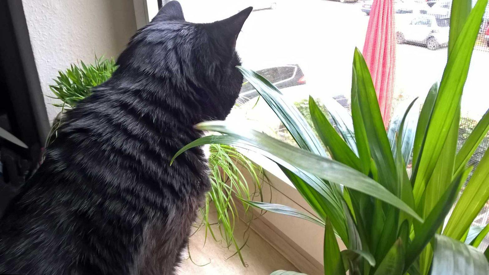 Luzis grüne Fensterbank: Luzi und ihre Pflanzen für Katzen