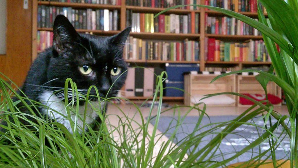 Noch immer Luzis Liebstes: Katzengras