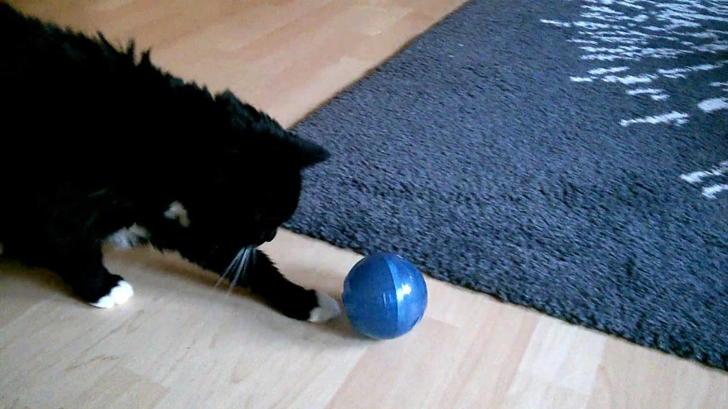 Luzi beim Katzen Fußball Training
