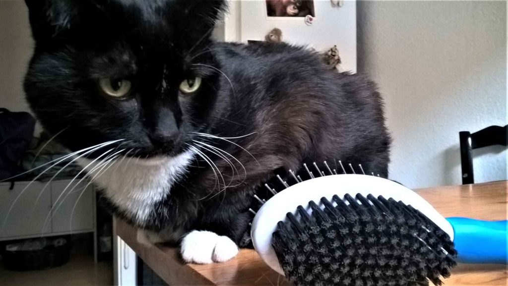 Katzen Fellpflege: Luz liebt ihr Wellness Programm
