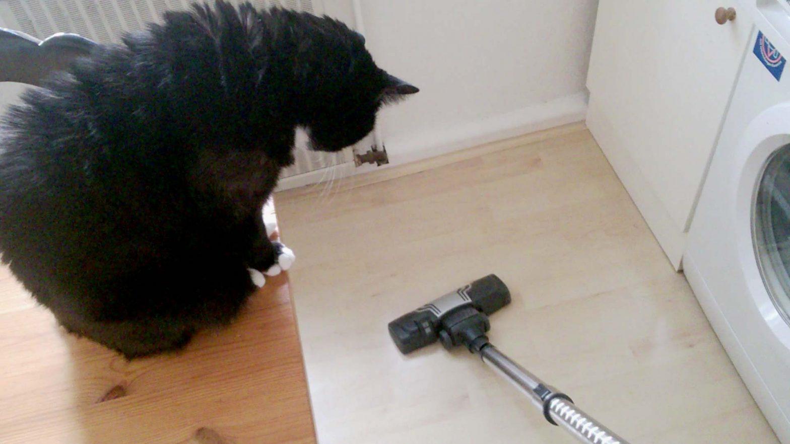 Luz schaut von oben zu: Katze hat keine Angst vor Staubsauger