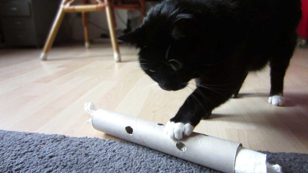 Katze Luzi spielt mit ihrer dicken Nudel, einer mit Leckerli gefüllten Papprolle