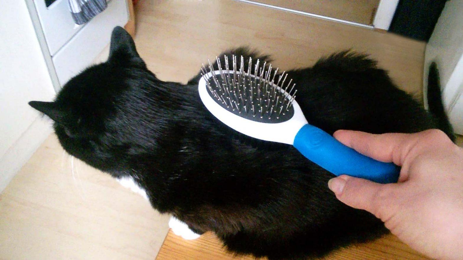 Katzen Fellpflege mit großer Bürste. Luzi liebt es!