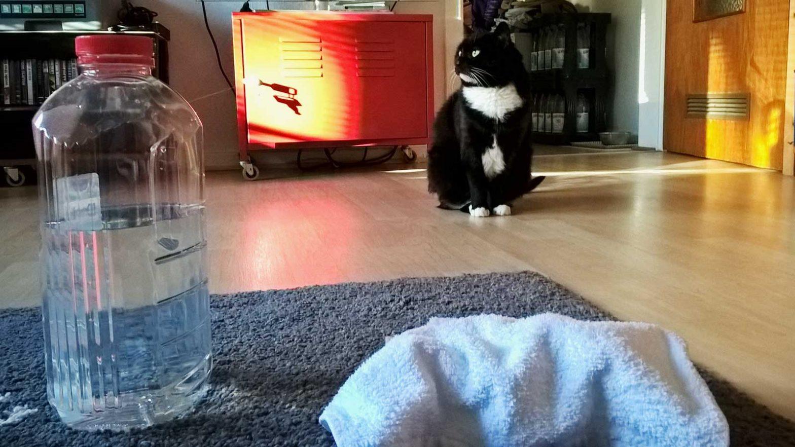 Katze Erbrochenes auf Teppich: Luzi ist sich keiner Schuld bewusst