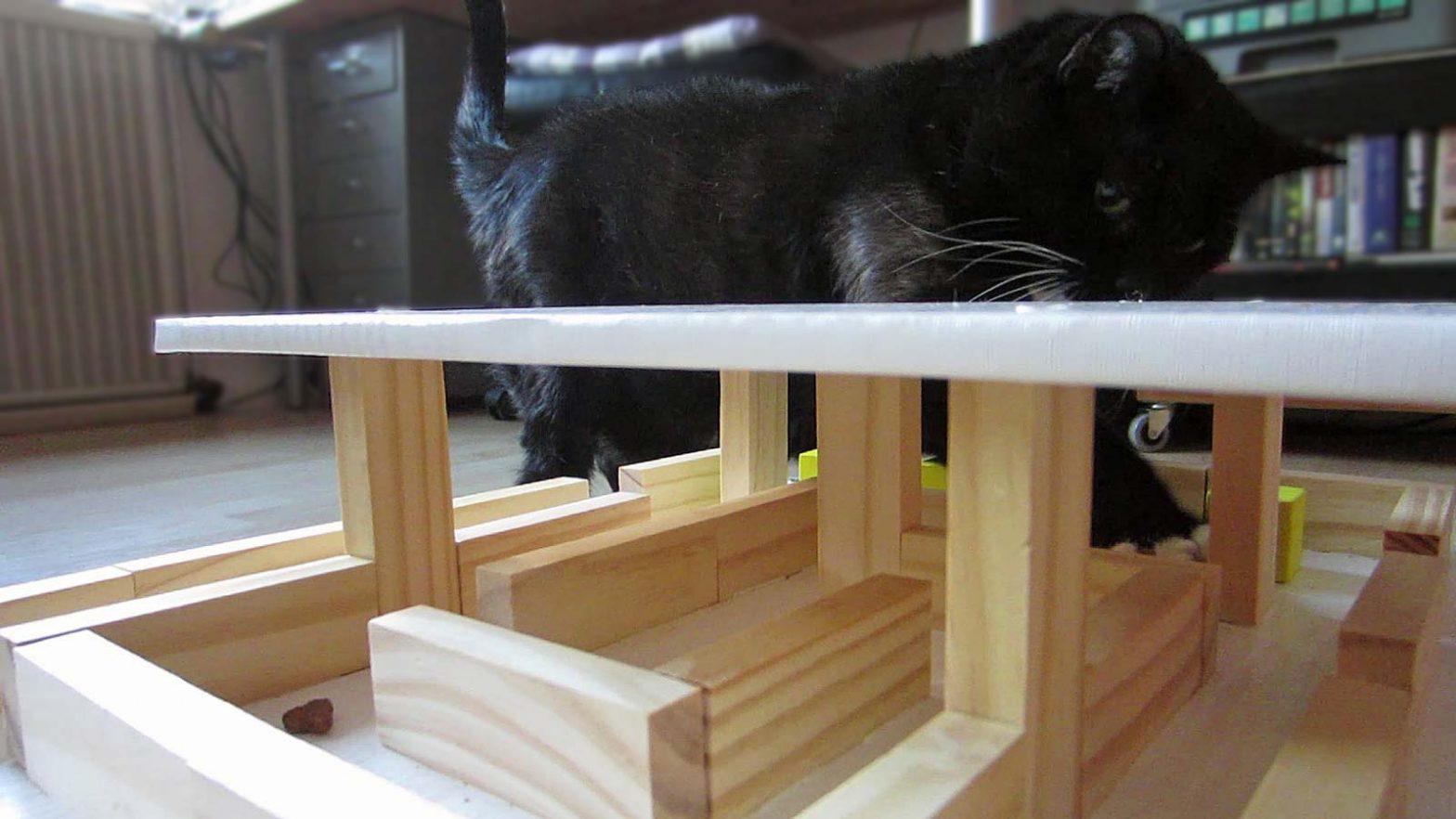 Luzi spielt mit ihrem Fummelhaus für Katzen