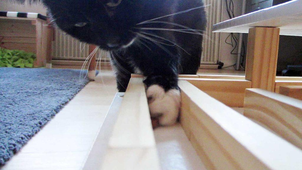 Luzi fummelt im ersten Stock ihres Fummelhauses für Katzen