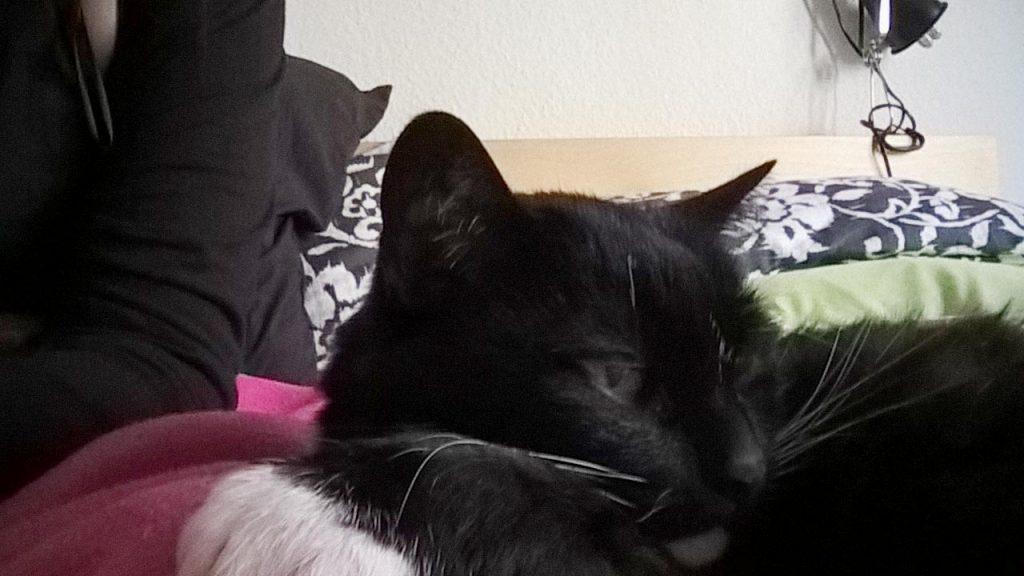 Katzen Husten kommt bei uns zum Glück nicht so oft vor: Luzi entspannt