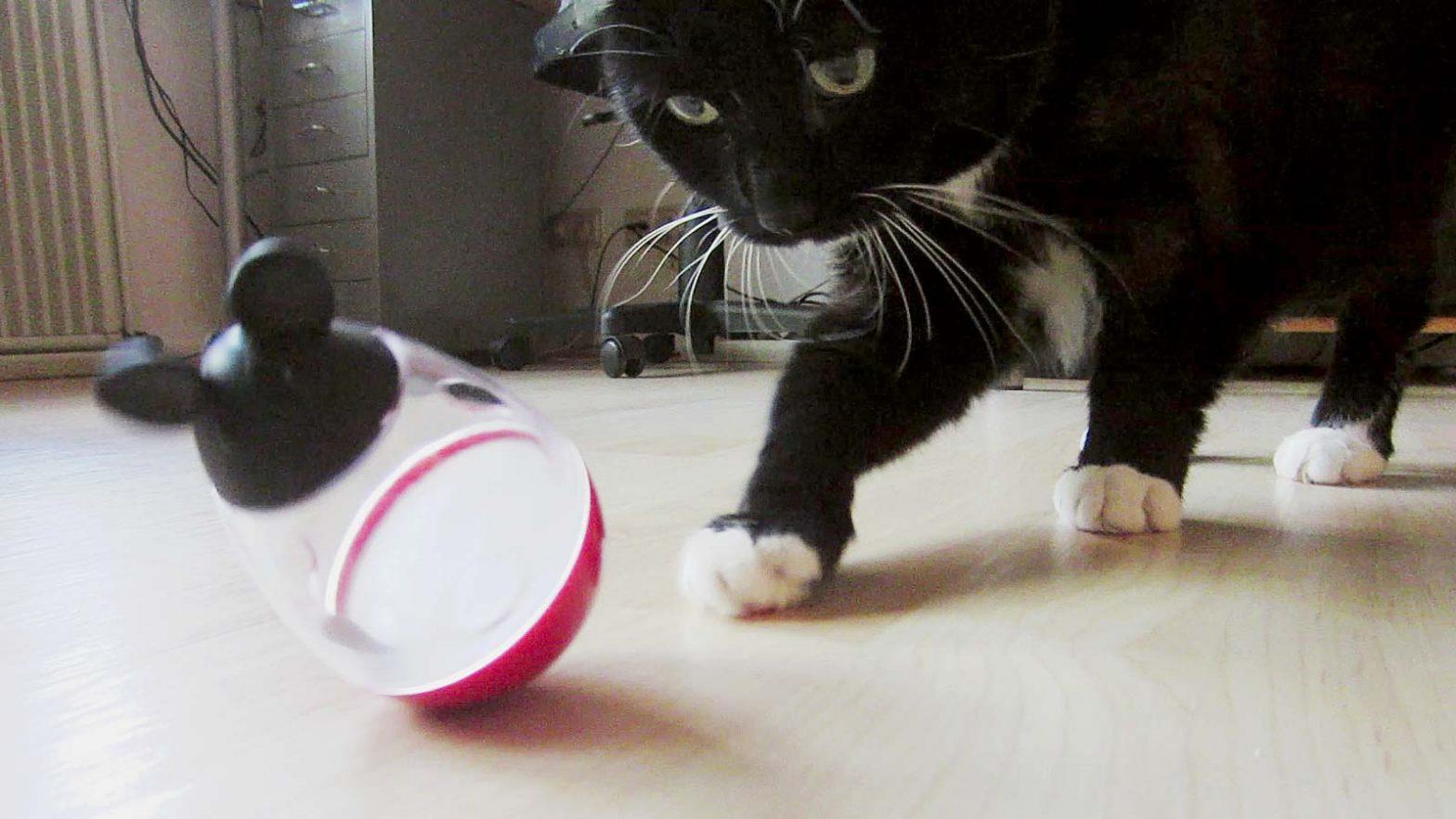Katze spielt mit Maus: Luzi mit ihrer Stehaufmaus
