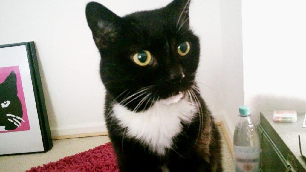 Springt mir morgens fast ins Gesicht: Frühaufsteher Katze Luzi kurz vor sieben Uhr