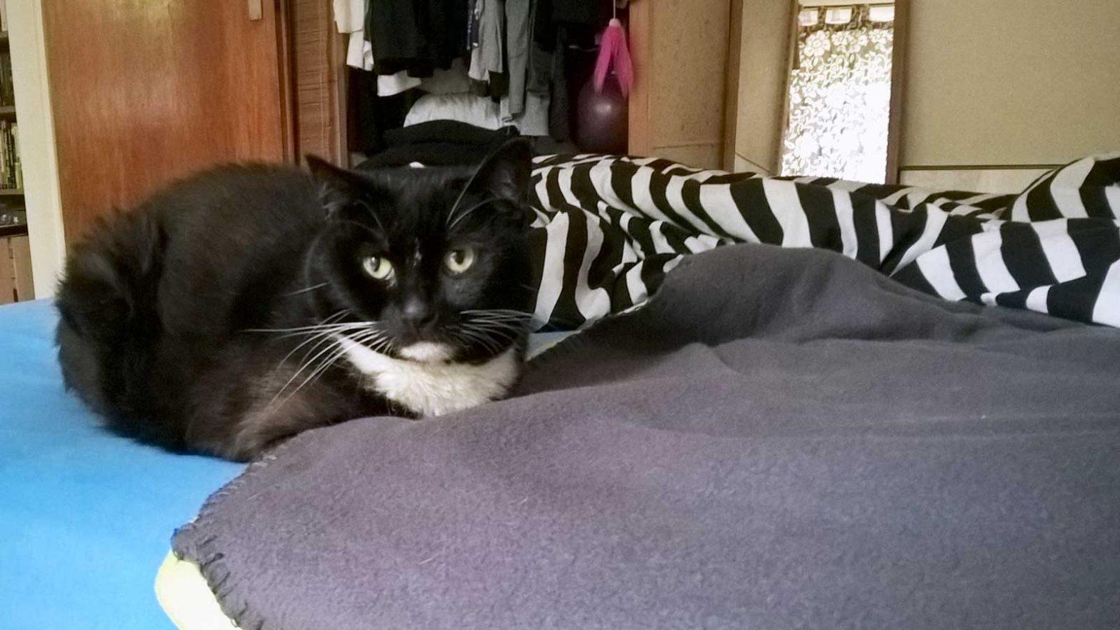 Wenn der Katzenmagen rebelliert: Luzi matt und müde
