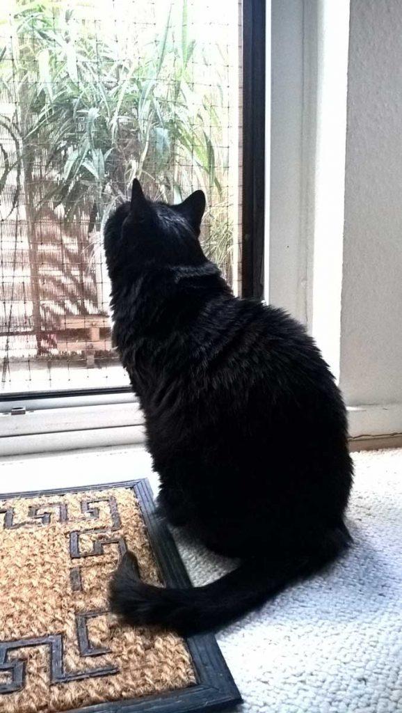 Leider kennt Luzi auch unseren Balkon nur von innen.
