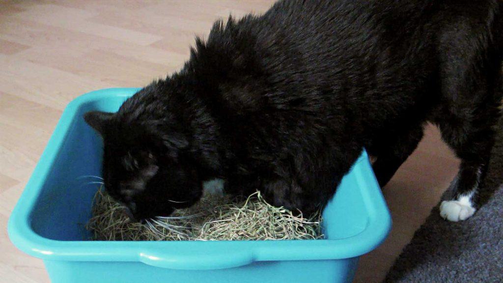 Luzi mit ihren Pfoten in getrocknetem Katzengras