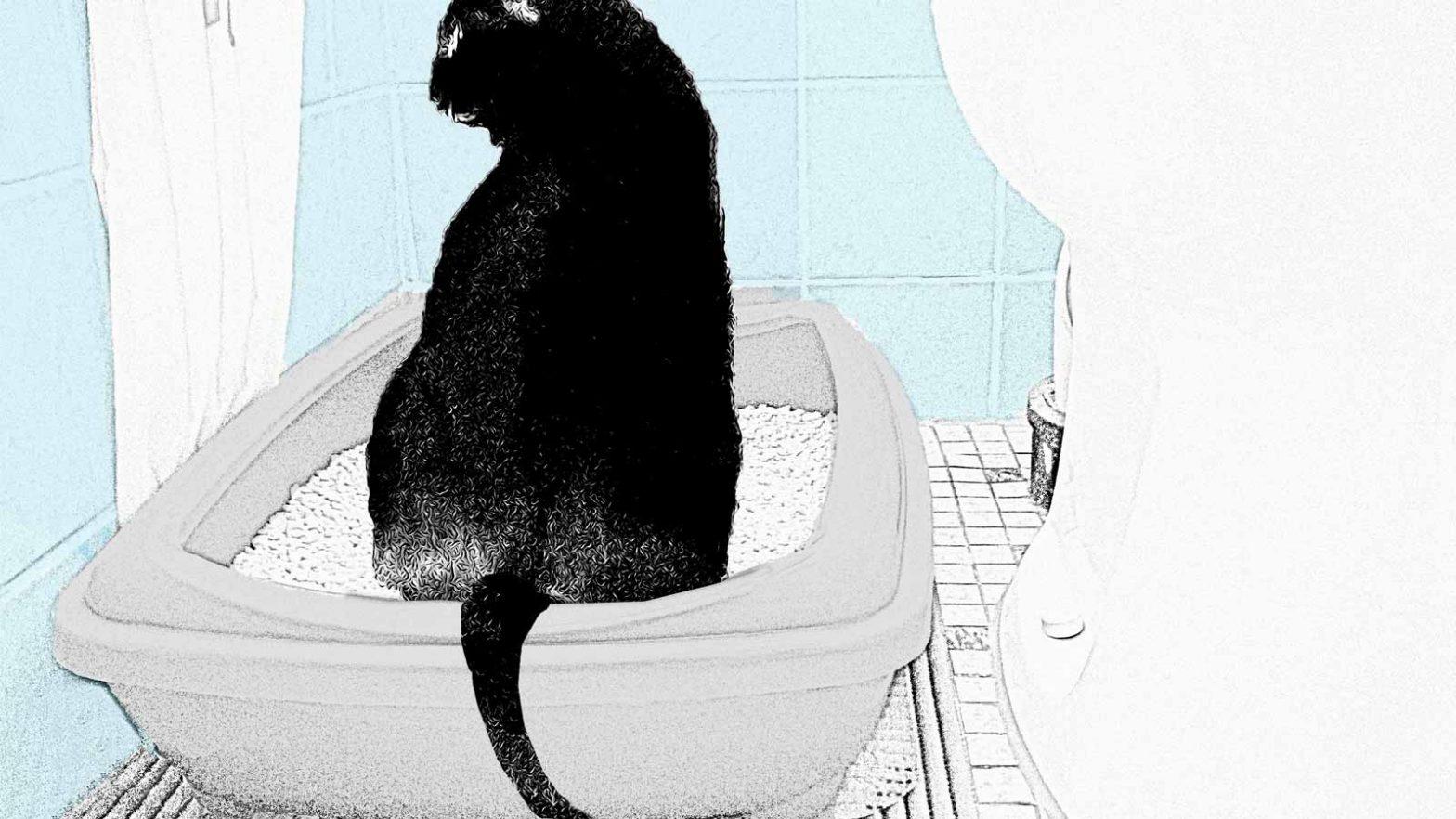 Luzis Katzenklo steht genau neben dem Menschenklo
