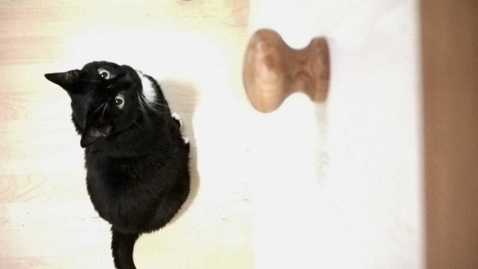 Luzi macht dem Hühnchen schöne Augen Schonkost für Katzen