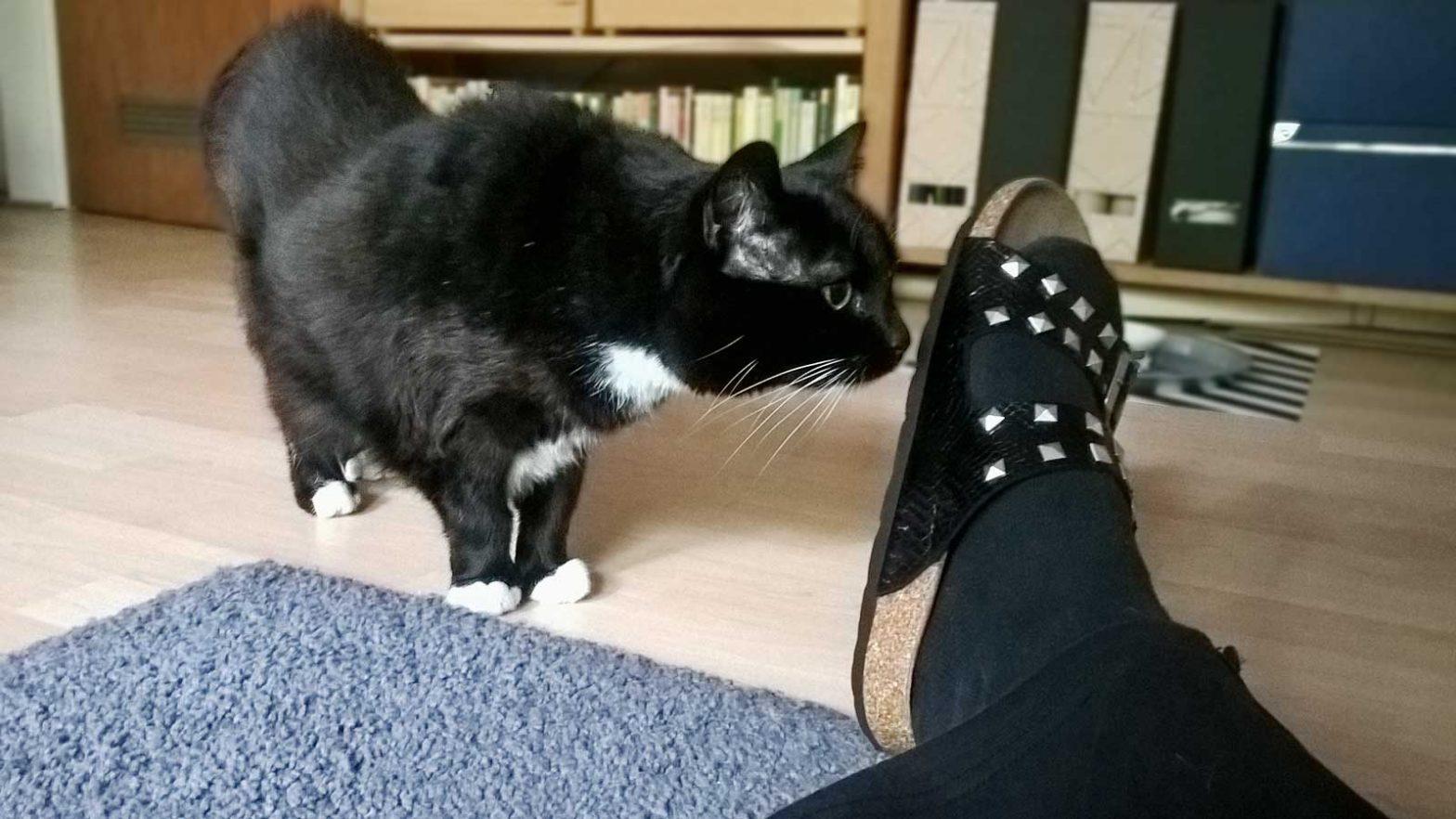 Katze schnüffelt überall: an Boden, Füßen und direkt am Ohr