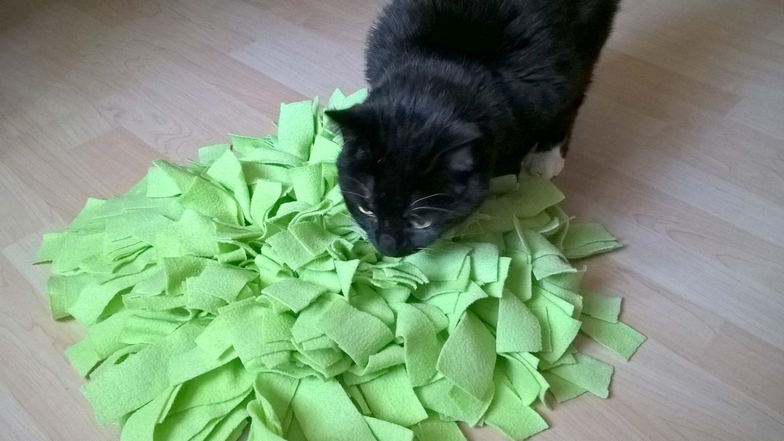 Luzi spielt mit ihrem Schnüffelteppich für Katzen