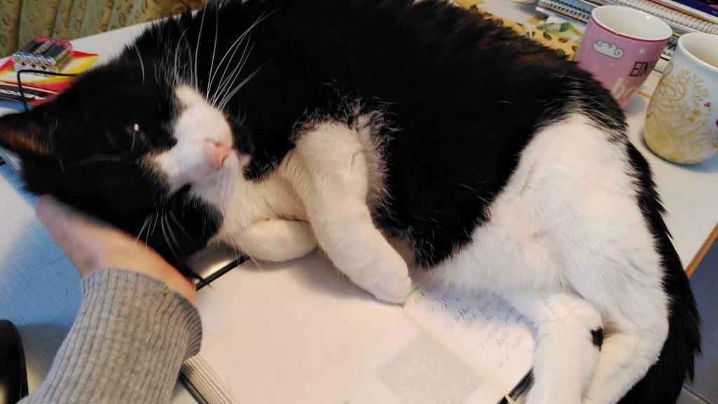 Eines dieser Rituale, die Katzen brauchen: Cobi, der im Homeoffice auf Arbeitsmaterialien liegt und sich kuscheln lässt. foto: Romy