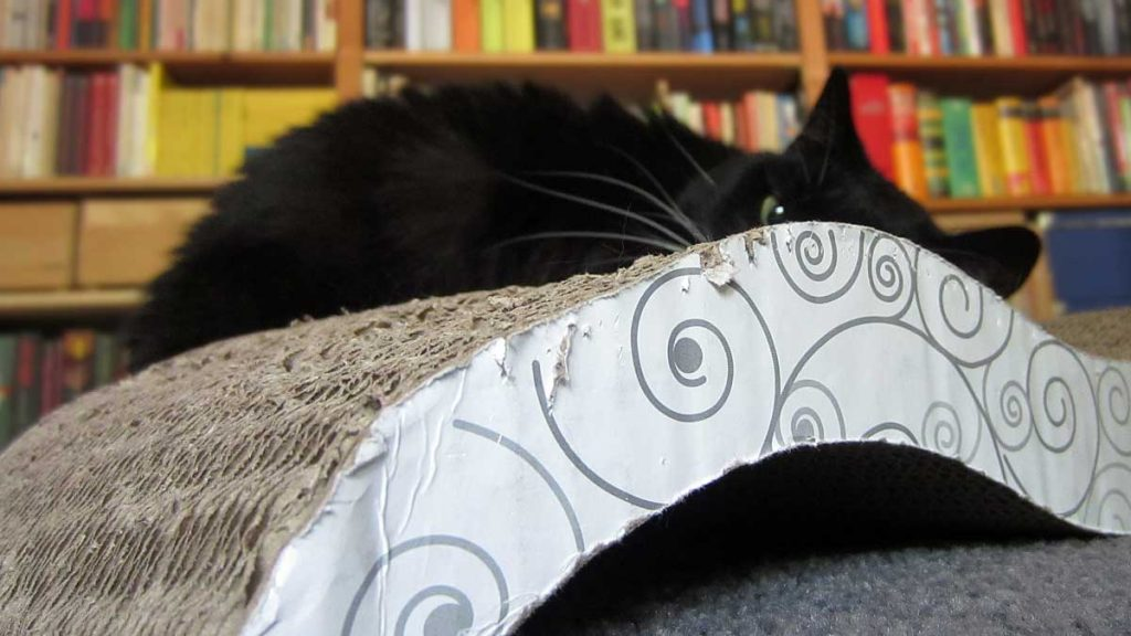 Luz und ihre alte Kratzwelle aus Pappe