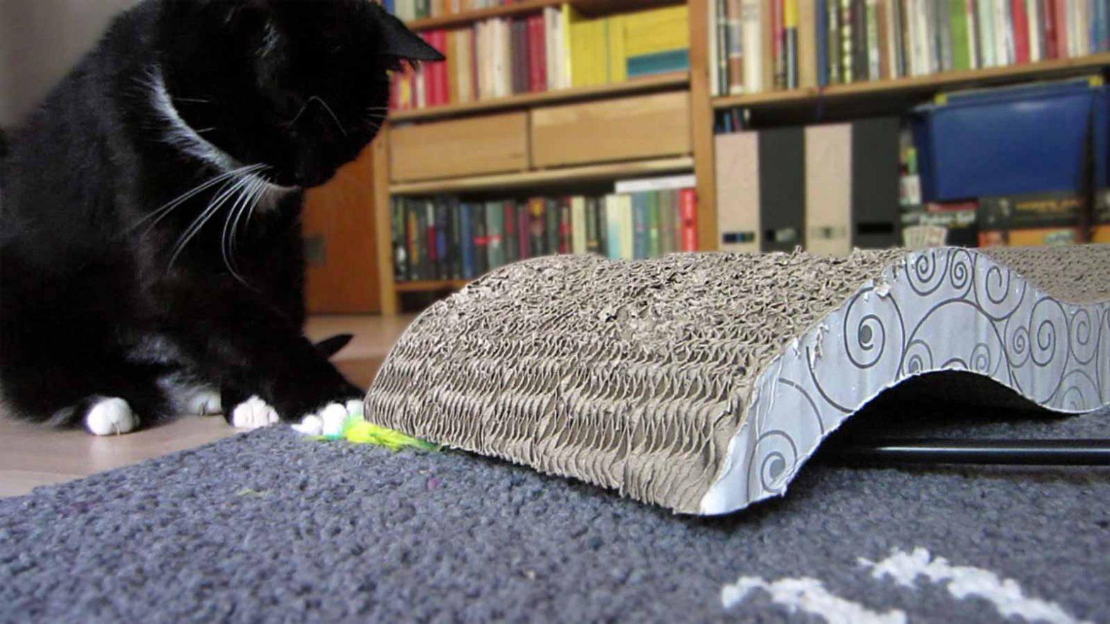 Spielen mit der Kratzwelle aus Pappe: Luz jagd den Federstab
