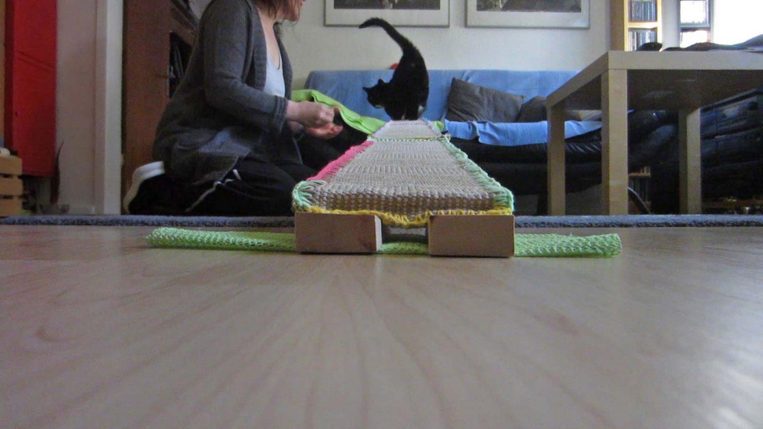 Luzi bei ihrem Bewegungstraining für Katzen