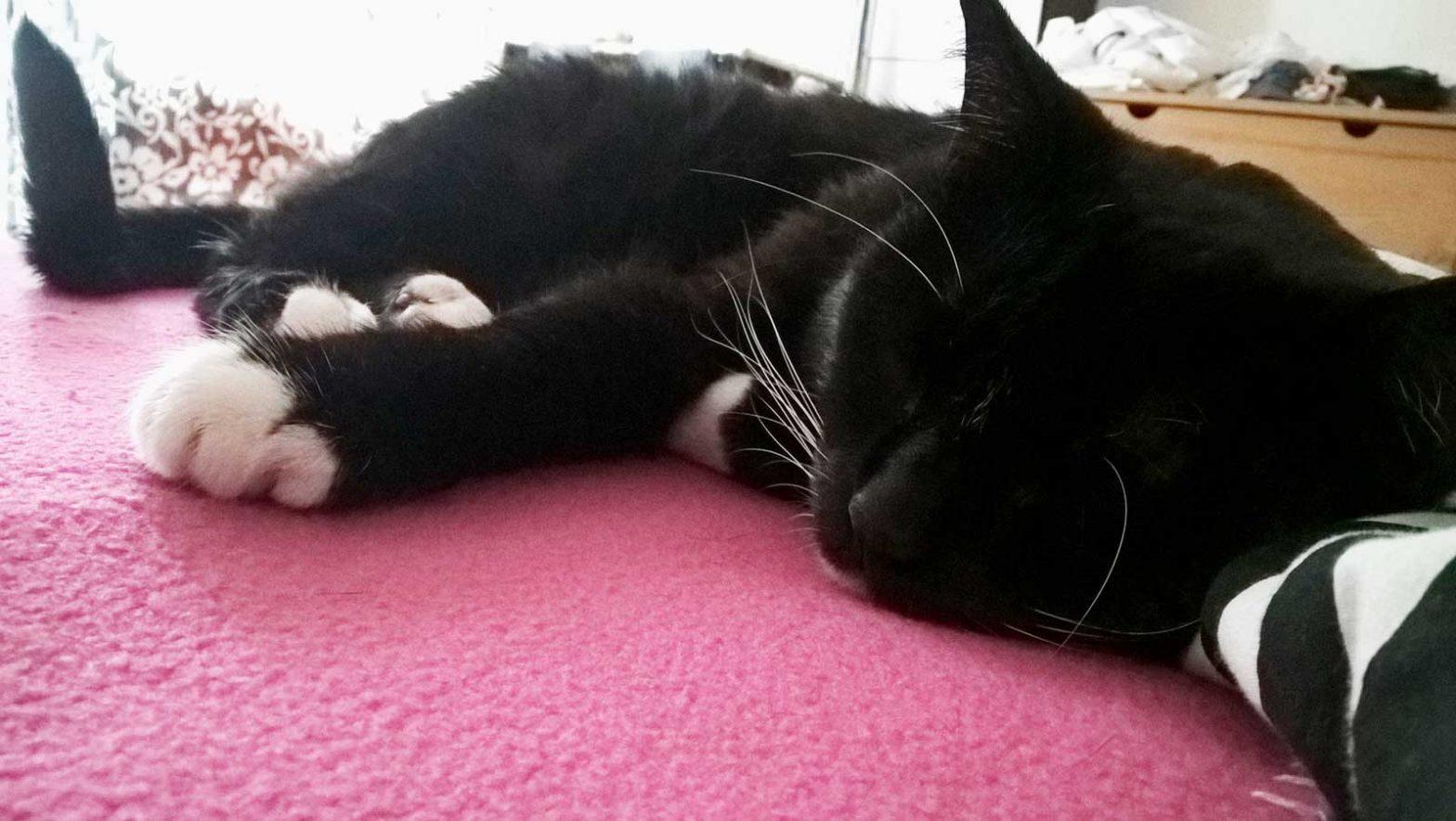 Eines der wichtigen Katzen Rituale: Luzi beim Schläfchen am Vormittag