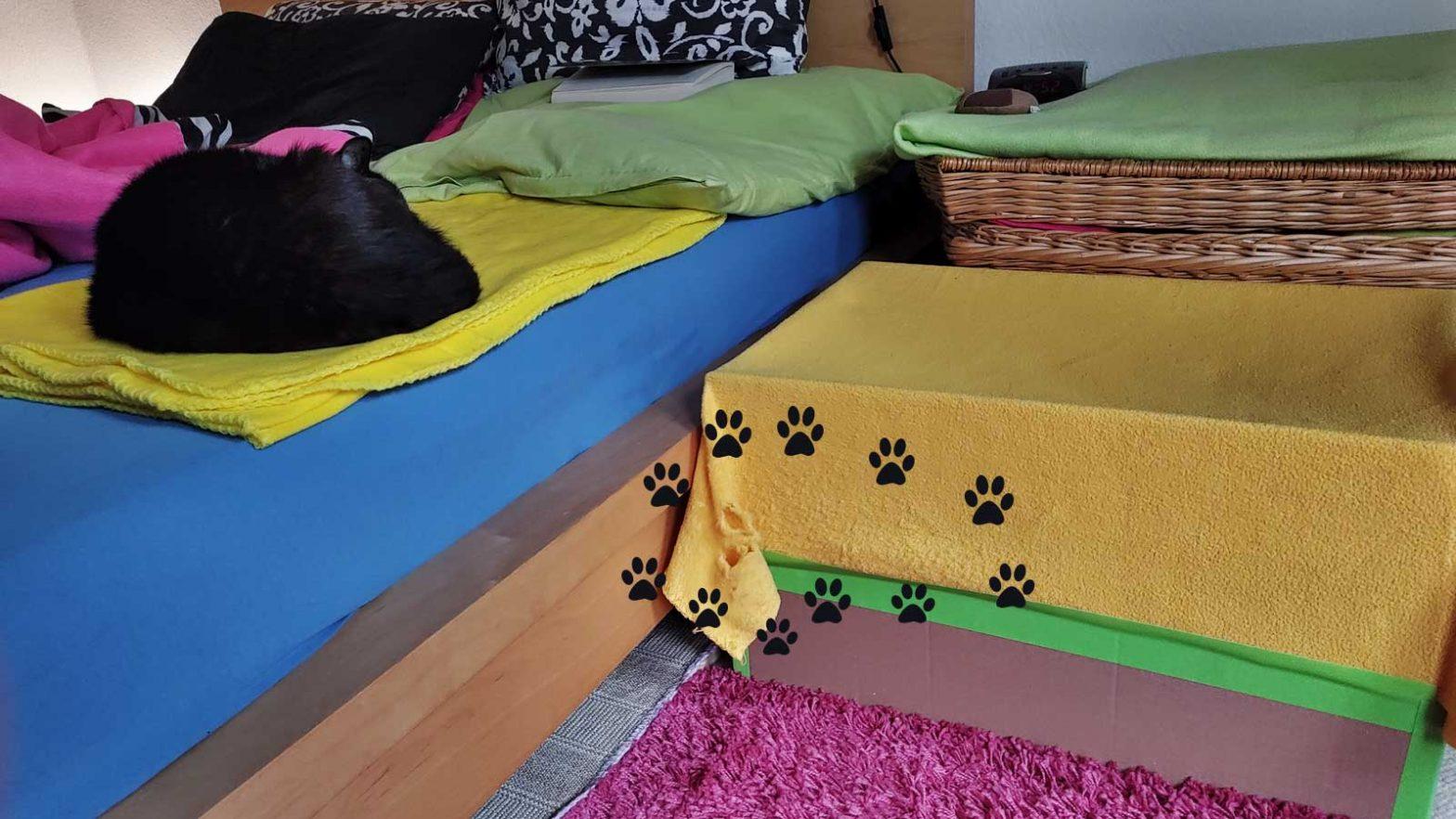 zerkratztes Trampolin, das Katze Luzi beim Training gegen ihre Schmerzen beim Stuhlgang sichert
