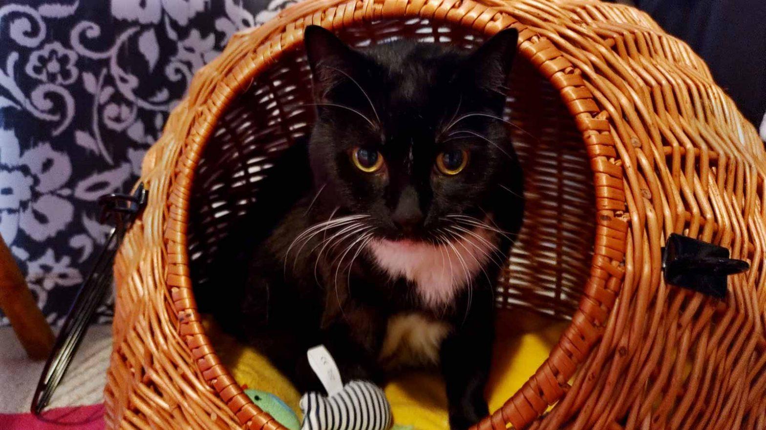 Luzi in ihrer Weidenhöhle für Katzen