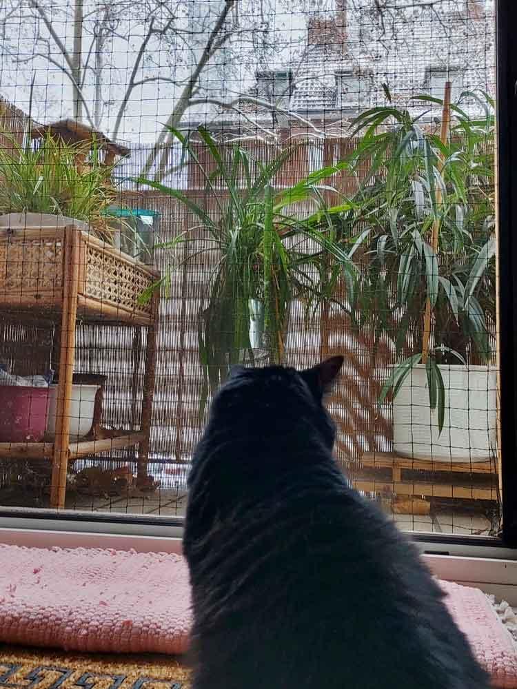 Mögen Katzen Schnee? Luzi ist da ganz klar: NEIN!