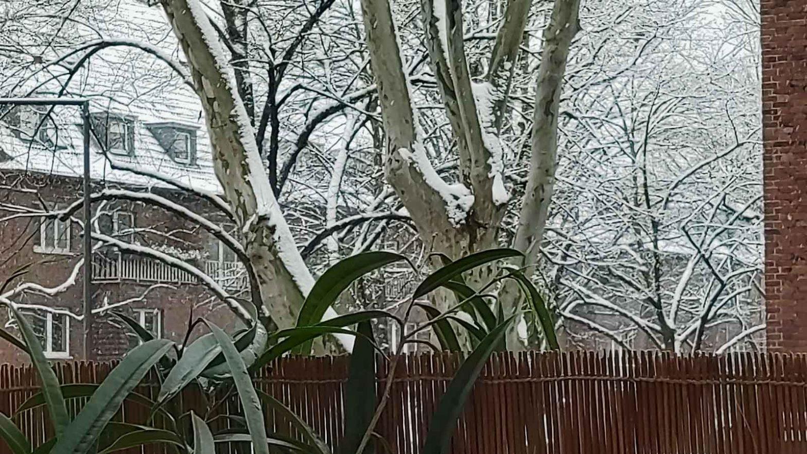 Luzis Blick auf ihren ersten Schnee in Luzis Revier
